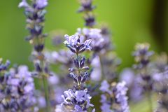 Põe as flores sobre seu fundo colorem seu lugar de trabalho Fotos de Stock