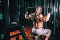Põe o halterofilista atlético do indivíduo, execute o exercício com instrumento do gym, no músculo o mais largo da parte traseira imagem de stock