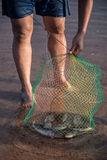 Põe peixes na grelha Fotografia de Stock