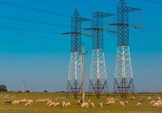 Põe pilões e linhas de alta tensão em uma paisagem agrícola em Bulgária Imagens de Stock Royalty Free