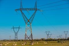 Põe pilões e linhas de alta tensão em uma paisagem agrícola em Bulgária Fotografia de Stock Royalty Free