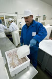 Põr o gelo sobre faixas de peixes Fotografia de Stock