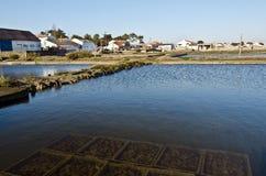 Pöl av ostronlantgården med undervattens- växande ostron fotografering för bildbyråer