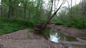 Pöl i skog Arkivfoto