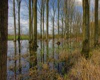 Pöl i skogen Arkivbild