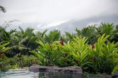 Pöl med varmt termiskt vatten i ett hotell för fem stjärna som vårarna tillgriper och Spa Fotografering för Bildbyråer