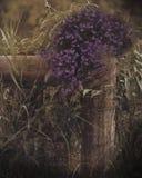 púrpura Foto de archivo