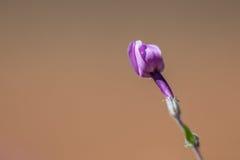 Púrpura cerrada imagen de archivo libre de regalías