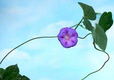 Púrpura - cielo azul Imagenes de archivo
