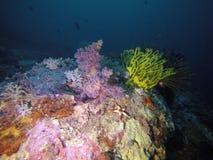 Púrpura coralina suave Fotos de archivo