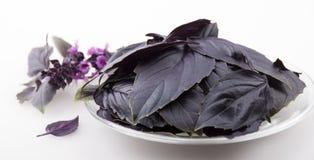 Púrpura de la albahaca en una placa de cristal fotografía de archivo libre de regalías