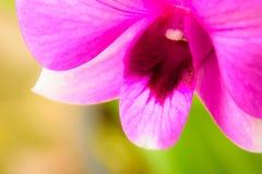 púrpura de la orquídea Fotografía de archivo libre de regalías
