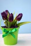 Púrpura de los tulipanes: enhorabuena, el 8 de marzo día internacional del ` s de las mujeres, el 14 de febrero día del ` s de la Imágenes de archivo libres de regalías