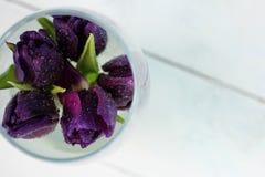 Púrpura de los tulipanes: enhorabuena, el 8 de marzo día internacional del ` s de las mujeres, el 14 de febrero día del ` s de la Fotografía de archivo