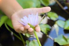 Púrpura de Lotus en la mano Fotos de archivo libres de regalías