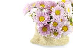 Púrpura del color de la flor de la momia Fotografía de archivo libre de regalías