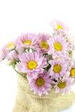 Púrpura del color de la flor de la momia Fotos de archivo