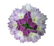 Púrpura del geranio de la foto Imagenes de archivo