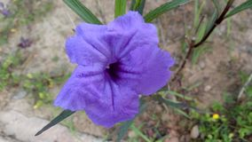 Púrpura en amor fotografía de archivo