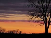 Púrpura oscura, lavanda, puesta del sol anaranjada con la silueta del árbol Imagenes de archivo