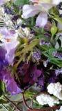 Púrpura púrpura Fotografía de archivo