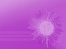 Púrpura pura Foto de archivo libre de regalías