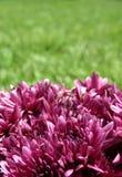 Púrpura y verde fotos de archivo