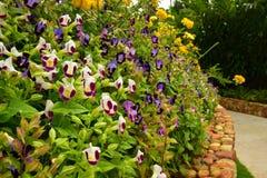 Púrpura y violeta con las flores amarillas cerca de la manera de la trayectoria foto de archivo