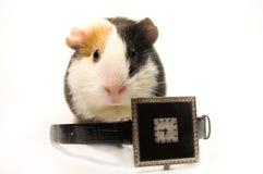 Pünktliches piggy-wiggy Stockbild