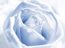 pączek róży srebra Obraz Royalty Free