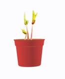 pączek rośliny fotografia royalty free