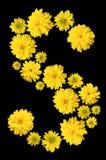 Pączki żółty Heliopsis kwiat wykładają z listowym S zdjęcie stock