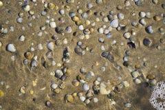 Pąkli kłamstwo na piaskowatej plaży obraz stock
