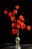 Pęcherzycy alkekengi w wazie Zdjęcia Royalty Free