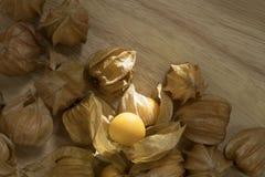 Pęcherzycy owoc lub przylądków agresty owocowi na natury tle Zdjęcie Royalty Free