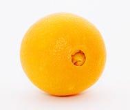 pępek pomarańcze Obraz Royalty Free