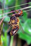 Płótno pająk obrazy royalty free