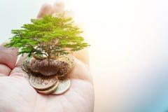 Płaci pieniądze darowiznę dla zielonego eco oszczędzania środowiska i uziemia ekologię podtrzymywalną zdjęcia stock