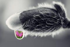 Płacząca magnolia Fotografia Royalty Free