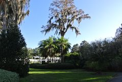 Płaczącej wierzby drzewa naturalny park zdjęcie royalty free