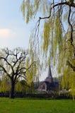 Płacze wierzbowy drzewo przy Godlaming Surrey Fotografia Royalty Free