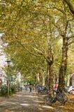Płascy drzewa w miasto ulicie obraz stock