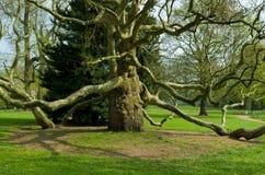 Płaski drzewo obrazy royalty free