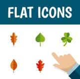 Płaski ikony Klonowy Ustawiający Lipowy, Hikorowy, Także Zawiera liść, Lipowi, Hikorowi elementy, Zdjęcie Royalty Free