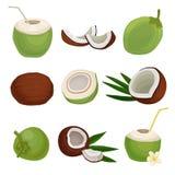 Płaski wektorowy ustawiający świezi koks Egzotyczny koktajl karmowy zdrowy naturalny owoce tropikalne Elementy dla produktu ilustracji