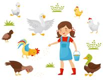 Płaski wektorowy ustawiający rolni ptaki, mała dziewczynka z wiadrem adra Dziecka żywieniowy ptactwo domowe Drobiowy uprawiać zie ilustracja wektor