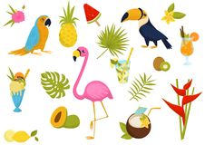Płaski wektorowy ustawiający tropikalni elementy Piękni ptaki, smakowici koktajle, owoc, lody, kwiaty i liście palma, royalty ilustracja
