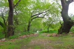 Płaskiego drzewa las zdjęcia royalty free