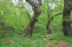 Płaskiego drzewa las zdjęcie royalty free