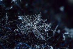 Płatek śniegu zbliżenia naturalny makro- strzał obrazy royalty free
